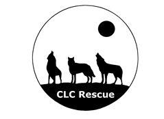 CLC RESCUE – CANE LUPO CECOSLOVACCO